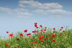 wild flowers landscape spring season - stock photo