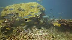 Fish feeding frenzy marine life wide Stock Footage