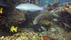Fish feeding frenzy hunting close - stock footage