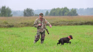 Stock Video Footage of Hunter coached German Shorthaired Pointer on the hunting