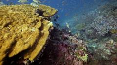 Fish feeding frenzy hunting drift Stock Footage