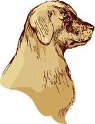 dog head - bloodhound hand drawn illustration - sketch in vintage style - stock illustration