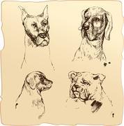 set of dogs heads - dalmatian, bloodhound, bulldog hand drawn illustration - - stock illustration