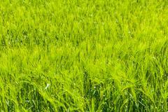 Green crop Stock Photos
