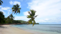 Two Palm trees over tropical beach Stock Footage