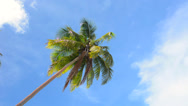 Stock Video Footage of Palm tree against tropical sky