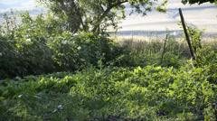 Watering system watering vegetable garden - stock footage