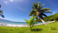 Stock Video Footage of Tropical beach with palm trees