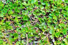 Leafy texture Stock Photos