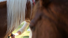 2 Horses, Head Closeup (Animals) Stock Footage