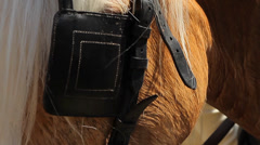 Horse, Head Closeup (Animals) Stock Footage