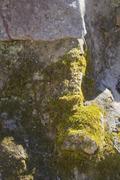 mossy stonewall - stock photo