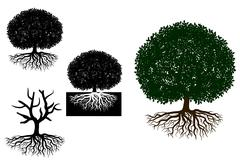 Big tree with roots Stock Illustration