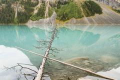 Fallen Trees in LakeLouise Stock Photos
