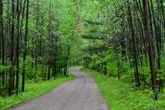Spring Trees along Driveway - stock photo