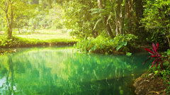 Beach on a small river in the rainforest Stock Footage