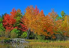 Fall Colors Along Lake Shore Stock Photos