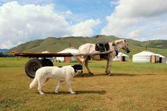 Dog and horse in front of mongolian yurts Stock Photos