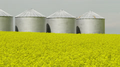 Canola crop in front of grain bins Stock Footage