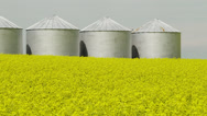 Stock Video Footage of Canola crop in front of grain bins