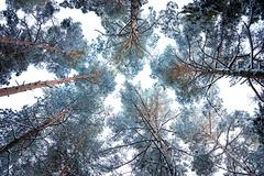 tree canopy in winter - stock photo