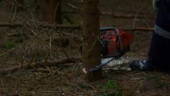 stock footage lumberjack fells a tree chain-saw 4K - stock footage
