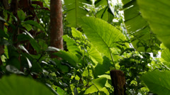 Tropical rainforest in Phuket Stock Footage
