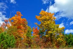 Fall Colors with Blue Sky Stock Photos