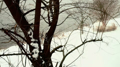 Winter lake looking through a tree Stock Footage