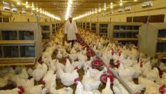 Vet on chicken farm Stock Footage