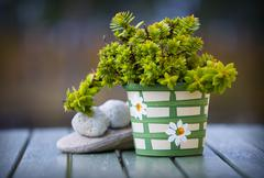 pot with green plant.gn - stock photo