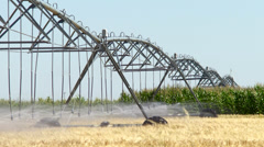 Working irrigation Pivot on grain and  corn crop - stock footage