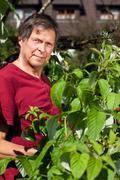 Elderly man in his garden harvest raspberries Stock Photos