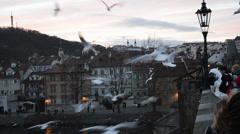 Gulls on the Charles Bridge in Prague - stock footage