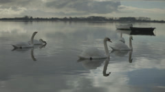 Swans in a group, Wide Shot moving into a tight of two swans Stock Footage
