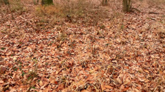 Autumn landscape in a foggy forest Stock Footage