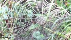 Spider web on wind Stock Footage