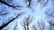 Stock Video Footage of Looking up at the oak trees in winter