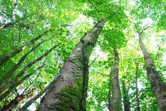 Towering canopy - stock photo