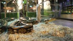 Snake syö hiiren Arkistovideo