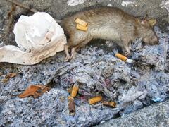 WASTE in street with dead rat Stock Photos