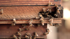 Bees entering hive Stock Footage