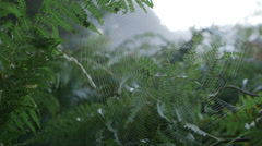 Cobweb and fern growth - slow pan - stock footage