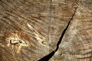 Stock Photo of severing cut of tree with  shake annual rings