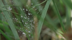 Cobweb with water drops - stock footage