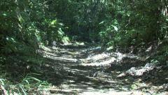 P03237 Coati Crossing Trail in Jungle in Costa Rica Stock Footage