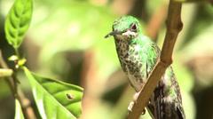 P03224 Hummingbird in Costa Rica Stock Footage