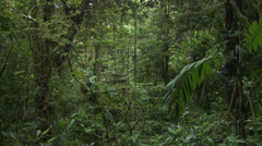 Stock Video Footage of P03228 Pan of Dark Tropical Jungle in Costa Rica