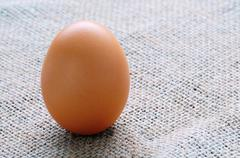 fresh egg - stock photo