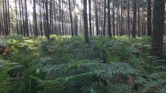 Forest and ferns timelapse - stock footage